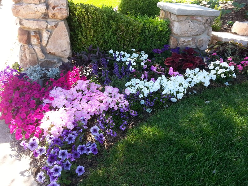 Windscapes Landscaping Landscape Design Seasonal Landscaping